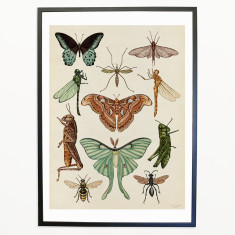 Animalium_Flying_Insects