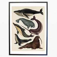 Animalium_Water_Mammals