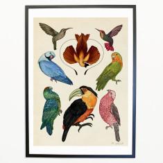Animalium_Exotic_Birds