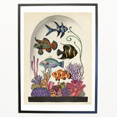 Animalium_Tropical_fish